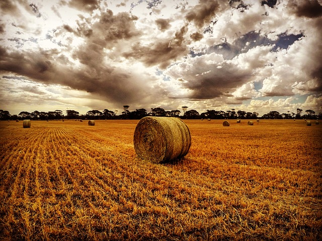 Working in Agriculture: Why Farm Insurance is Essential