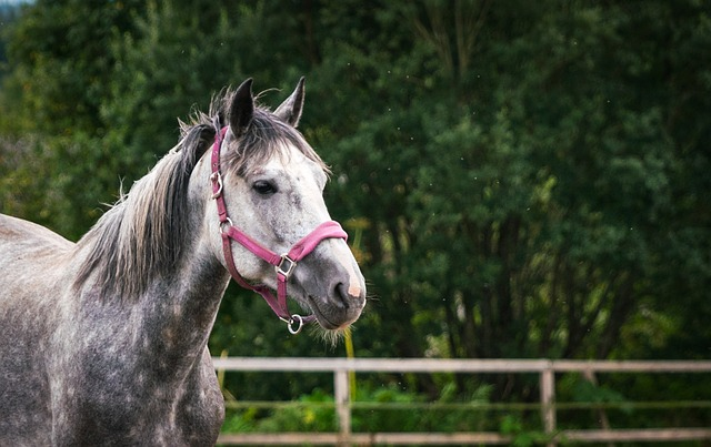 Invest in your Pet: Protect your Pet with Horse Insurance