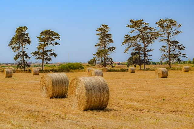Adequate Farm Insurance Can Save Your Business